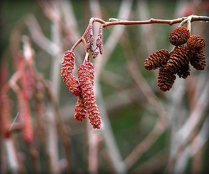 Catkins and Nutlets by Leah Grunzke