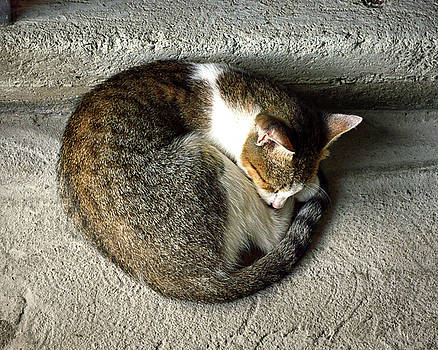 Catnapping Market Cat in St. Lucia by Bill Swartwout Fine Art Photography