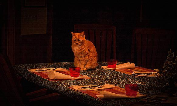 Cat-Nipper by Mary Nash-Pyott