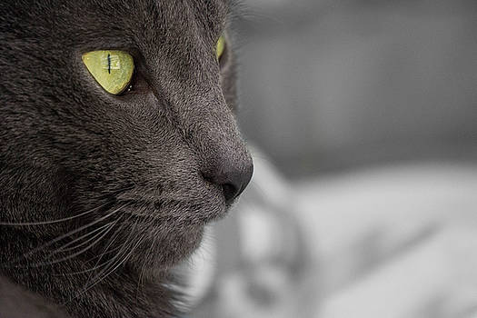 Cat's Eye by Jessica Bouloutian