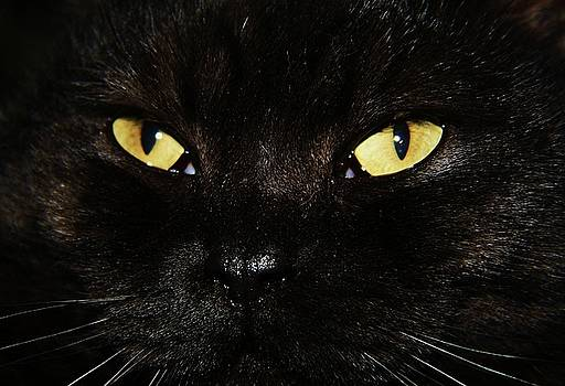 Cats eyes by Nick Thomas