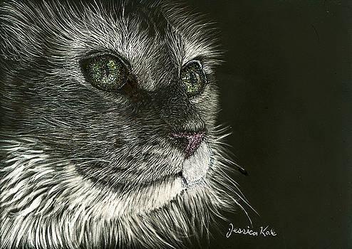 Cat's Gaze by Jessica Kale