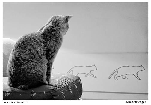 Cats by Mac of BIOnighT