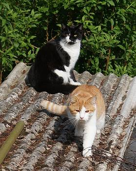 Cats on a Hot Tin Roof by Julia Woodman