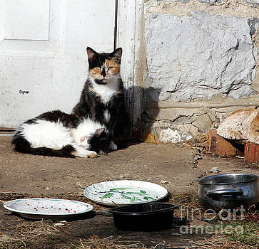 Cats Rural America  by Steven Digman