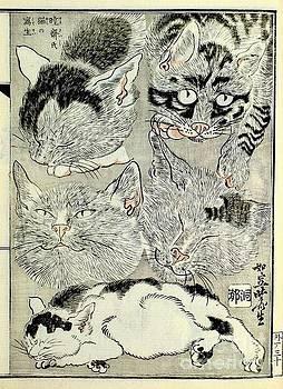 Peter Ogden - Cats Sketch Kawanabe Kyosai Japanese Meiji Period