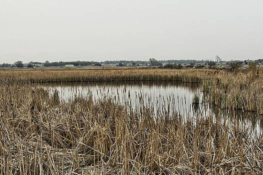 Cattail Pond by Jim Bunstock