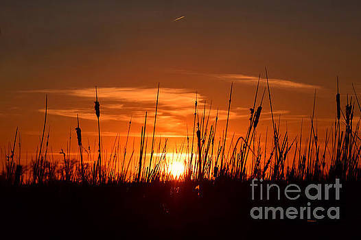 Cattails And Twilight by Kathy M Krause