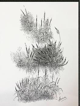 Cattails by Ashima Kaushik