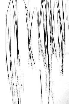 Debbie Oppermann - Cattails Black And White
