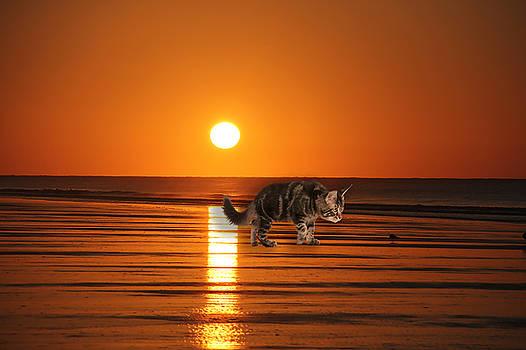 Cattin Fripp Island by Cynthia Leaphart