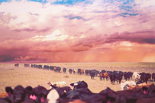 Cattle Drive by Stacy Burk