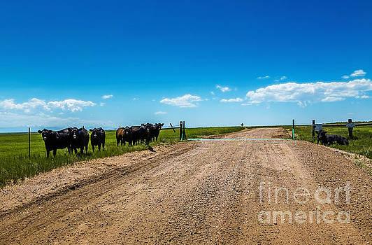 Jon Burch Photography - Cattle Guard