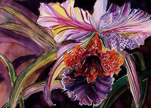 Cattleya Orchid by Mindy Newman