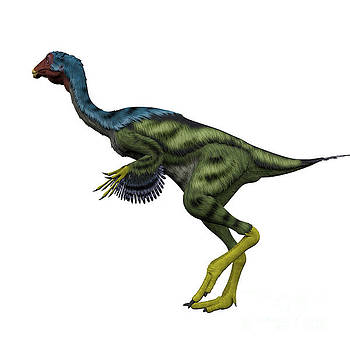 Corey Ford - Caudipteryx Side Profile