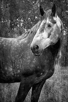 Caught in the Rain in Black and White by Mary Lee Dereske