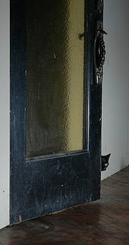 Cautious Cat by Dave Fischer