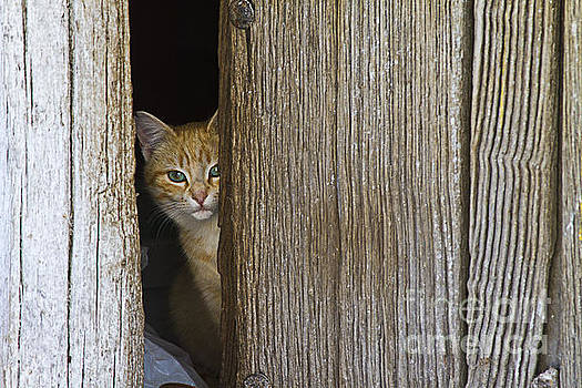 Heiko Koehrer-Wagner - Cautious Kitty