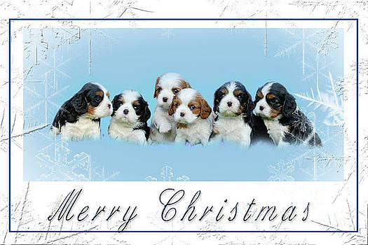 Cavalier King Charles spaniel Christmas Card by Waldek Dabrowski