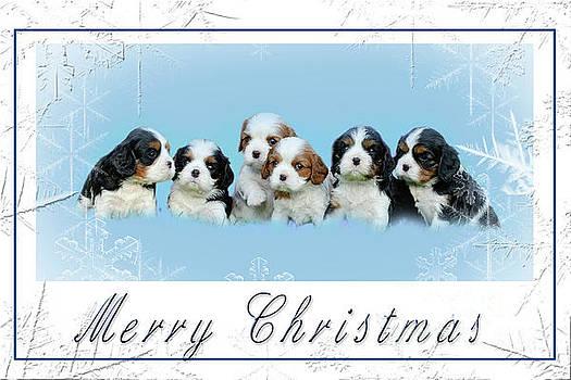 Waldek Dabrowski - Cavalier King Charles spaniel Christmas Card