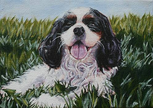 Cavalier King Charles Spaniel by Wendy Whiteside