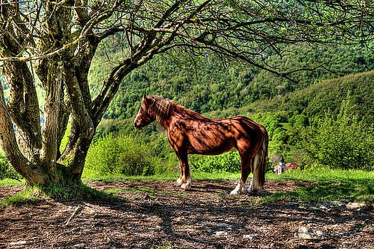 Enrico Pelos - CAVALLA PLAINS HORSE - CAVALLO AL PIAN DELLA CAVALLA