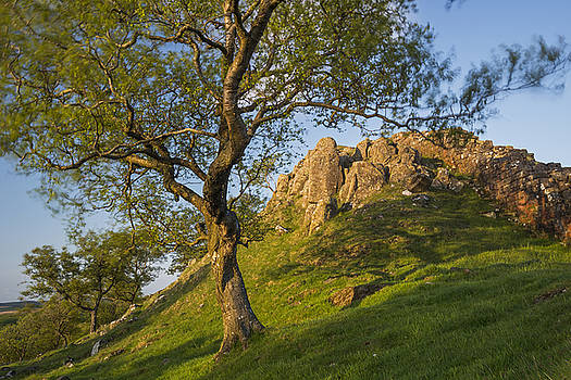 David Taylor - Walltown Crags