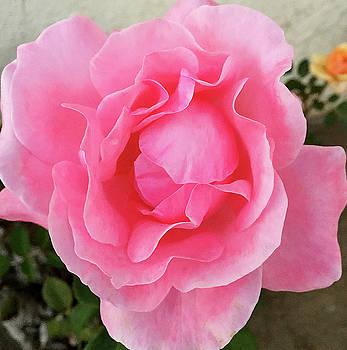 Robert Meyers-Lussier - CB Rose