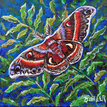 Cecropia Moth by Gail Butler