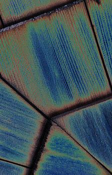 Carolyn Stagger Cokley - cedar blu