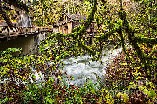 Jamie Pham - Cedar Creek Mill Mosses
