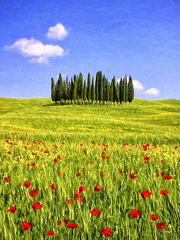 Dominic Piperata - Cedar grove and Tuscany Poppies