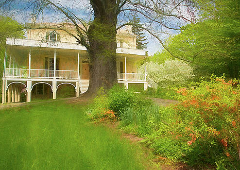 Cedar Grove in Spring by Nancy De Flon