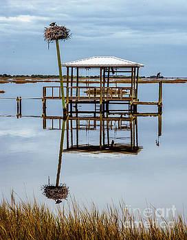 Cedar Key Dock by Thomas Levine