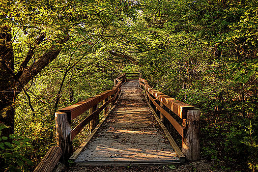 Scott Bean - Cedar Ridge Trail
