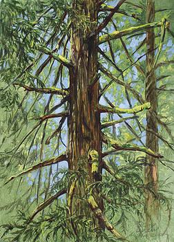 Cedar by Shari Erickson