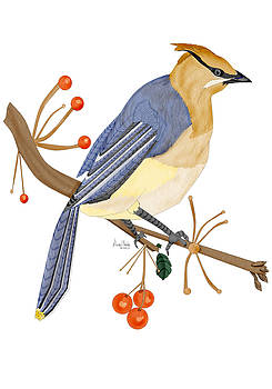 Cedar Waxwing in the Berries by Anne Norskog