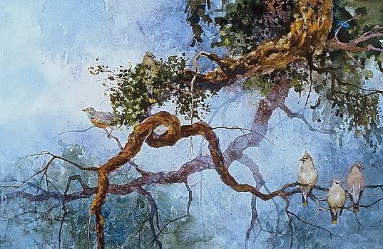 Cedar Waxwings by Floy Zittin