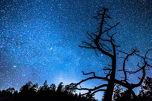 James BO Insogna - Celestial Stellar Universe
