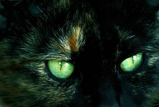 Barbara  White - Celtic Cat