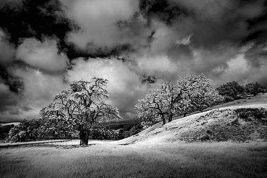 Central California Ranch by Sean Foster