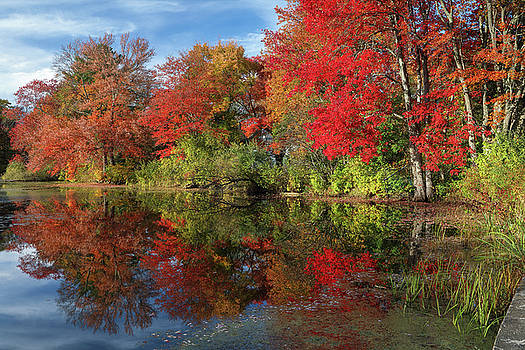 Central Massachusetts Fall Foliage Brillance by Juergen Roth