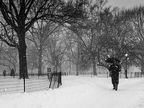 Central Park Blizzard by Cornelis Verwaal