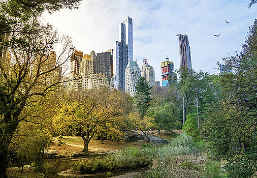 Central Park in Fall by June Marie Sobrito