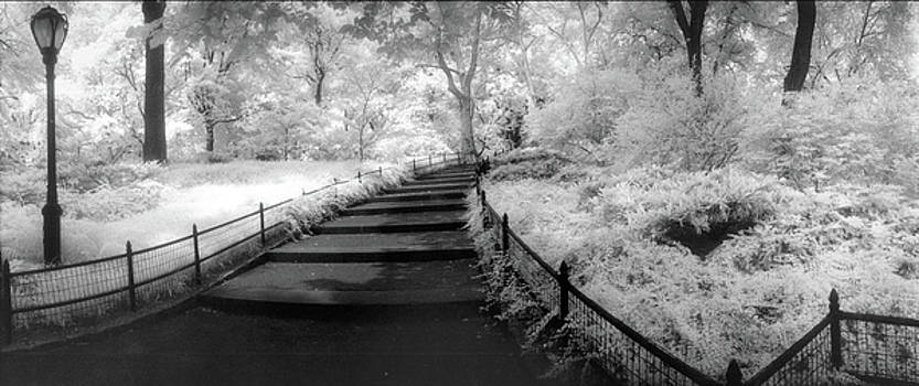 Central Park Path by Christine Hauber