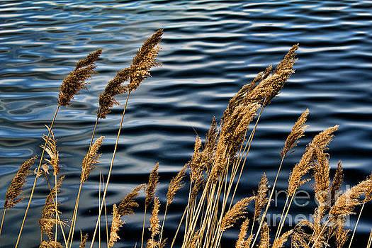 Chuck Kuhn - Central Park Reservoir II