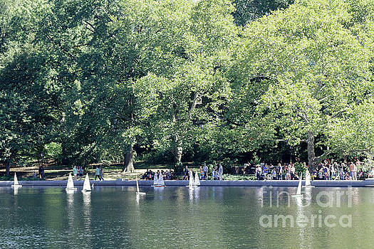 Central Park  by Silvia Bruno