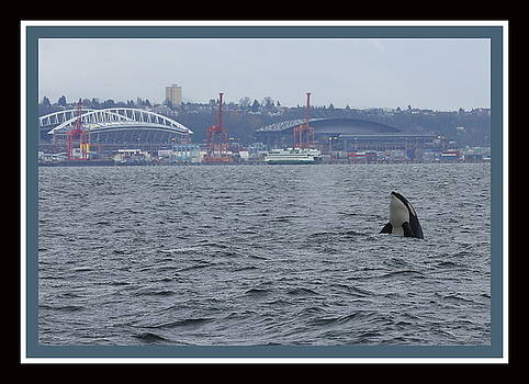 Century-Safeco-Orca by BYETPhotography