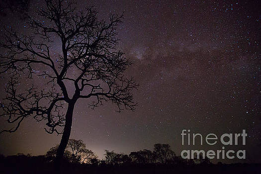 Cerrado by night by Gabor Pozsgai