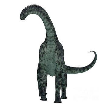 Corey Ford - Cetiosaurus Dinosaur on White